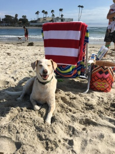 He's happiest at the beach.